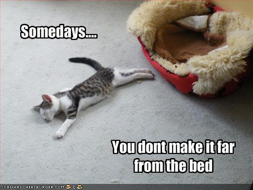 funny cat quotes. Or this.