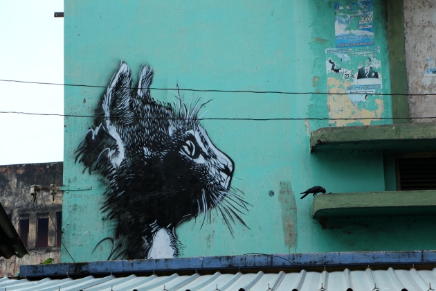 Street Cat – Definitely a favourite from the stencils in Colombo. So easy to miss this when you're walking past.